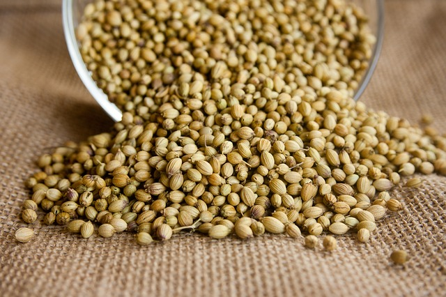 Ем семена кориандра